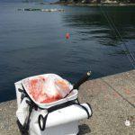 【入門編】磯釣りのコマセを入れるバッカンの選び方