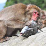 【磯に表札を】猿の惑星